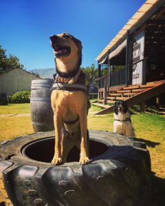 Bella with K-9 Adventures in the Hickville garden